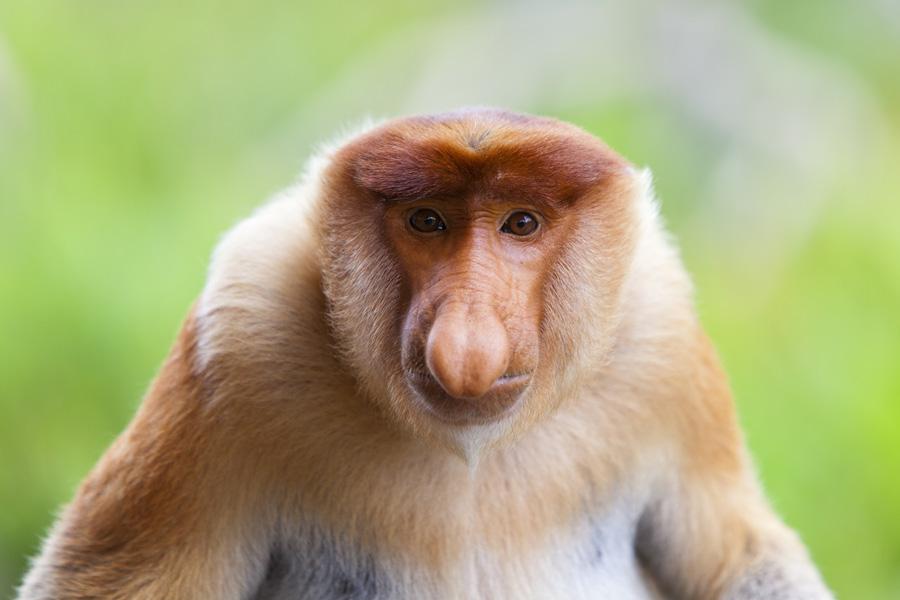 viaje a medida a Borneo, safari en Borneo, safari por la selva de Borneo