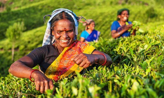 Viaje Sri Lanka con Maldivas